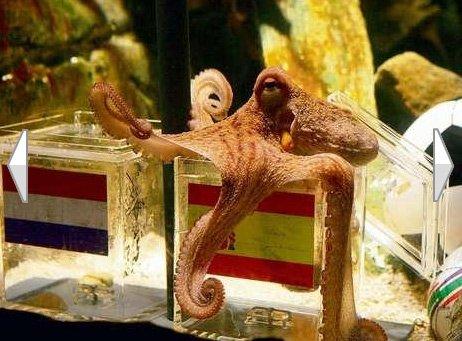 德国章鱼保罗转行广告帝 拍广告捐公益(组图