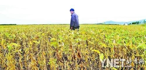 转基因大豆国内份额超八成 成美对华出口最大单