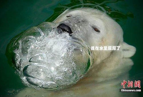 盘点2010年动物趣图 北极熊面对镜头招手(组图)