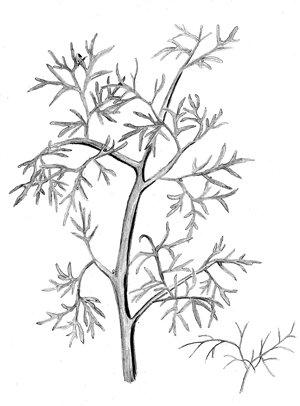 阳台植物手绘图