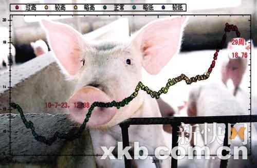 年内猪肉价格还将高位盘整 真正拐点料在明年