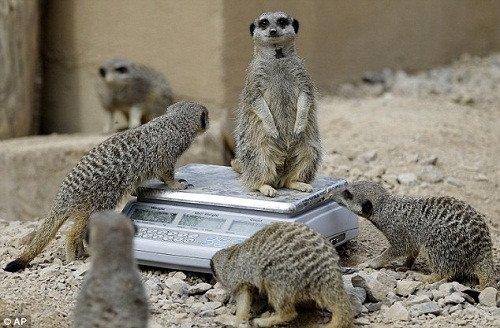 """伦敦动物园负责人大卫(davidfield)说,通过这样的""""体检"""",可以全面"""