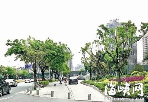 福州市乌山西路将增种大树45株 预计1年可成荫