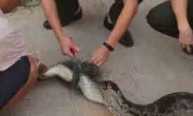 蟒蛇被困菜园 警民联手施救