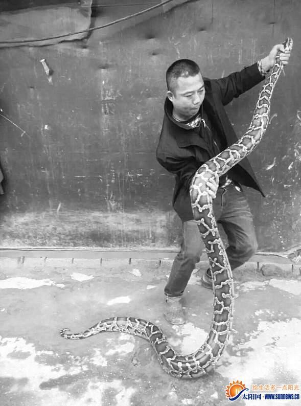 厦门天气放晴3.5米大蟒蛇爬出晒太阳 吓傻游客