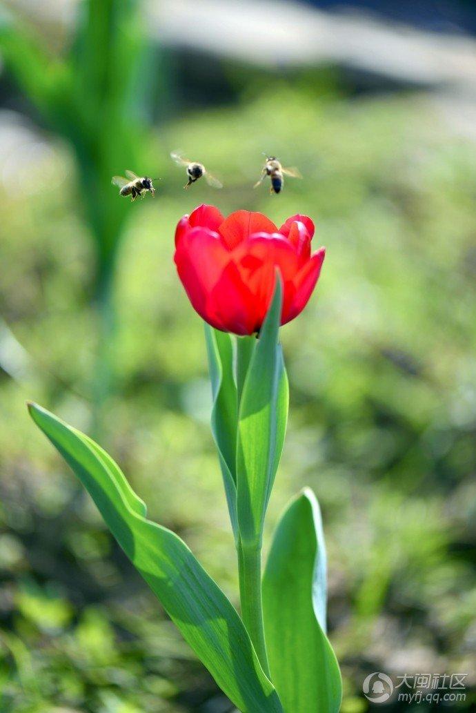 【寻找春天】百花齐放喜迎春