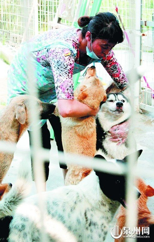"""长跑世界冠军张林丽在厦给69只流浪狗当""""妈妈"""""""