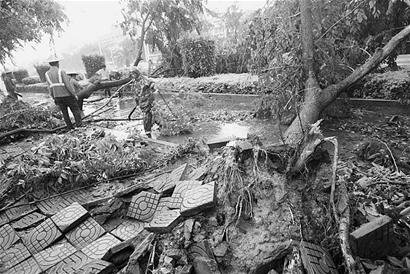 台风在漳州继续发威 刮倒树木阻碍交通