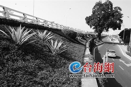 漳州3年打造500公里绿化长廊 已完成202公里