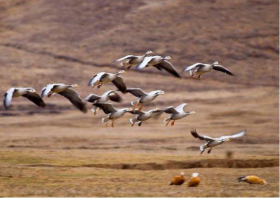 保利地产和基金斑头雁守护行动正式启动