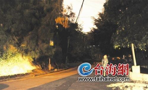 市政工程管理处表示东兴路的路灯问题会处理