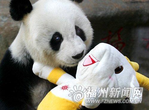 """熊猫""""巴斯""""将亮相亚运会开幕式福州分会场"""