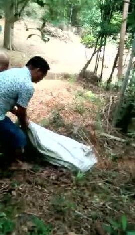 龙岩上杭60斤蟒蛇活吞40斤仔猪 霸占猪场