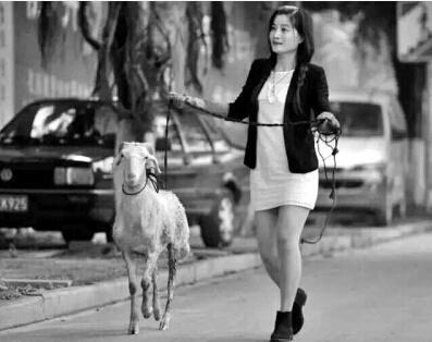 泉州美女下救羊 带回家安排单独套间和监控
