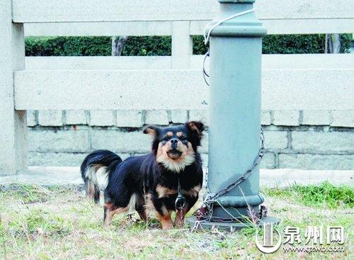 宠物狗遭车撞死 主人当街剥皮取肉欲吃狗肉