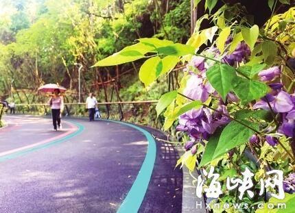 五彩梯田扮靓福州大腹山 2公里紫藤长廊市区最长