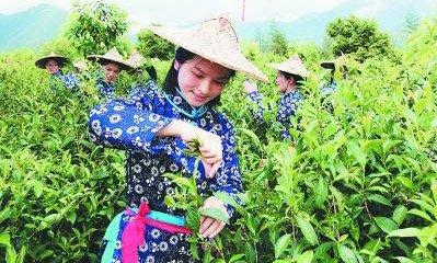 2019安溪开茶节举行