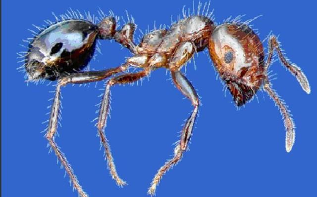 这年代,蚂蚁也吃人