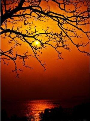 美丽 鼓浪屿/迷失在鼓浪屿的风景里