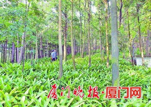 苏溪镇gdp_苏溪镇的经济发展(3)
