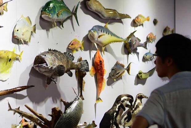 第四届中国动物标本大赛在福州举行 作品向公众开放