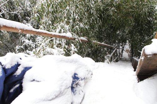 老农15米高树上建鸟巢居住 网友担心被强拆