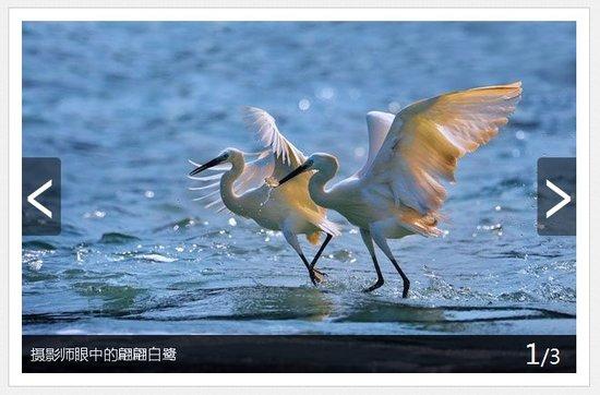 腾讯大闽网图片频道征稿启事