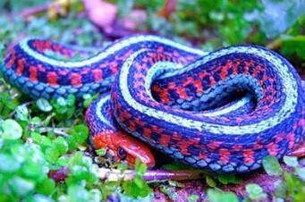 不会分辨有毒蛇?三步马上学会!