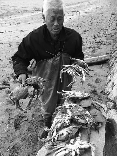 福清两口蟹池万余斤螃蟹一夜暴毙 疑遭人投毒