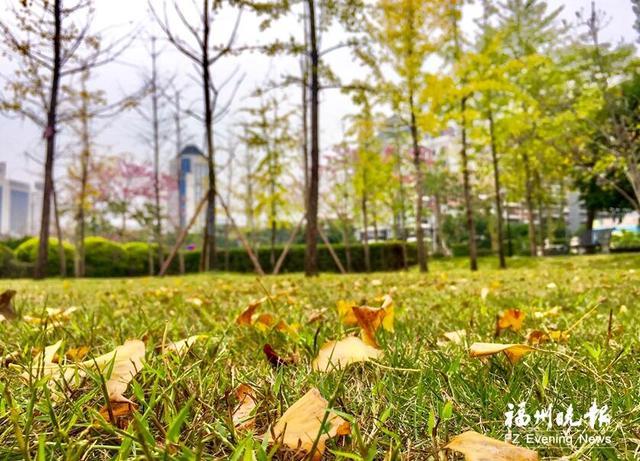 """去福州这些公园""""杏""""会美丽风景"""