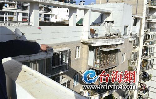 厦门:房子这么贵他却拿来养鸽子 邻居不敢开窗