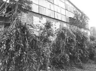 南安河滨堤外公园老树遭劈砍 市政局追查中