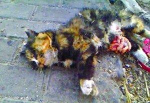 小区12只流浪猫连遭虐杀