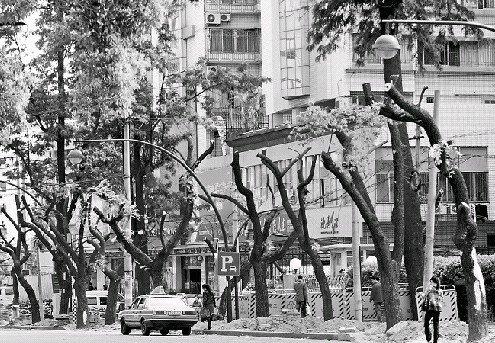地铁一号线站点开建 公司针对移树疑问详解