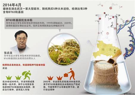 转基因大米种子或扩散至闽 40元一斤无种植许可
