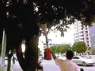 """福州三男子上树猛摇芒果树下路人""""中弹"""""""