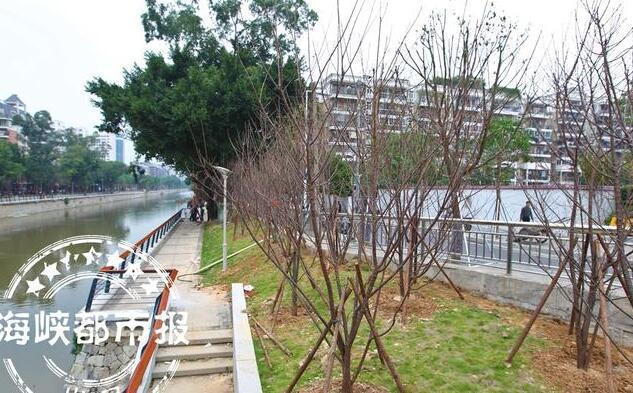 晋安河两岸将现樱花林 未来种植数量会超1600棵