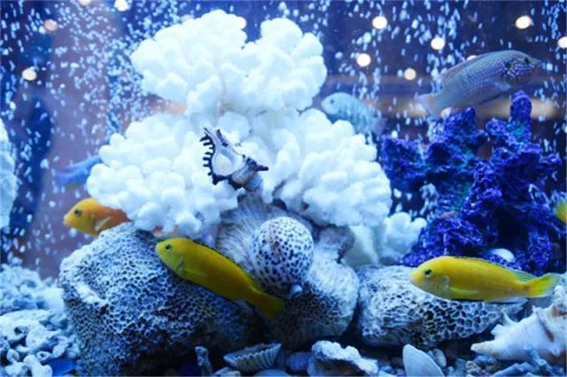 厦门休闲渔业展11月3日开幕 七大看点精彩不断