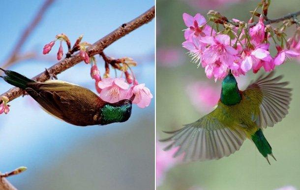 寻找春天・看万物复苏百花齐放