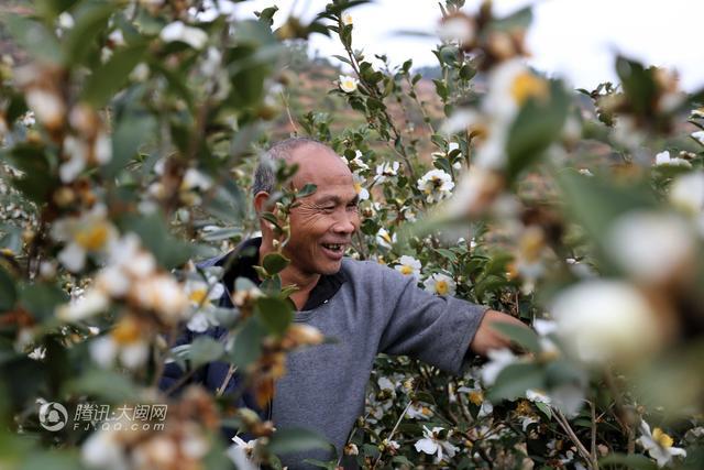 没有双臂和左眼 他用嘴修剪8万多棵油茶荒山创业