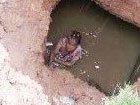 男童被同伴推入深坑