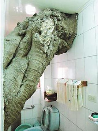 """台湾高雄:百年老树""""住""""进房屋已50年(图)"""