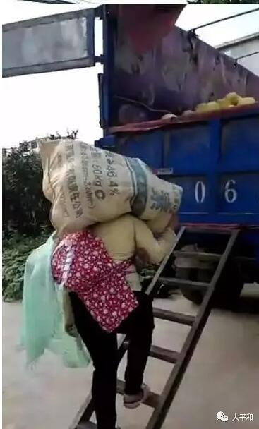 """漳州平和现""""铁汉母亲"""" 背婴扛柚感动朋友圈"""