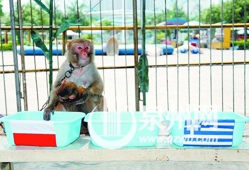 揭幕泉州动物园三大神兽