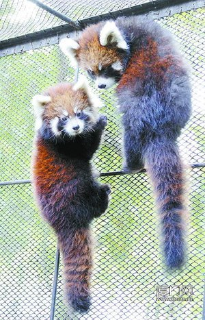 中山公园动物园今起免费 成全国首个免费动物园