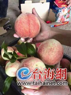 15万斤滞销桃子挂树上 90元一箱还能献爱心