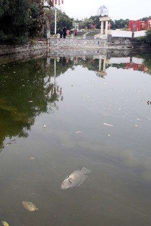 天气寒冷温泉公园死鱼渐多 靠近能闻到鱼腥味