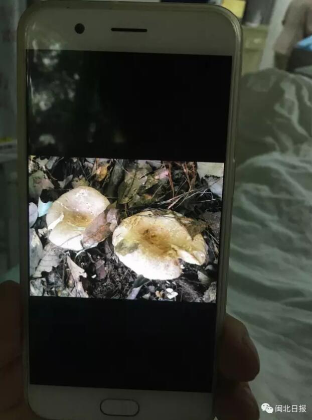 南平又有5人误食毒菇中毒了!这些毒蘑菇吃不得