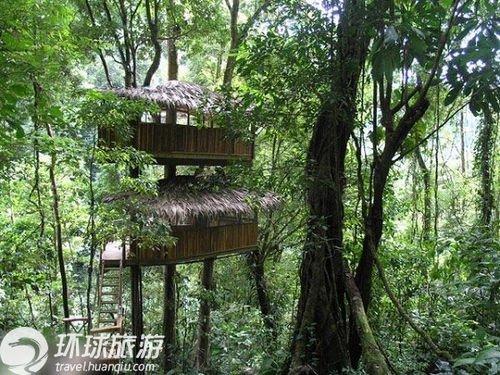 """做一只林中自由鸟 走进热带雨林""""树屋村"""""""