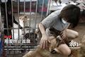 福建老屋内挤满103只流浪狗 在台风中瑟瑟发抖